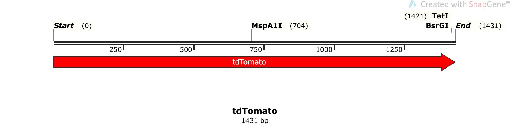 Addgene: pTol1-UAS:GtACR1-tdTomato