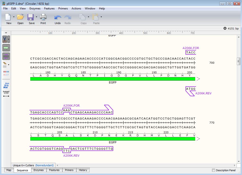 Primer binding sites