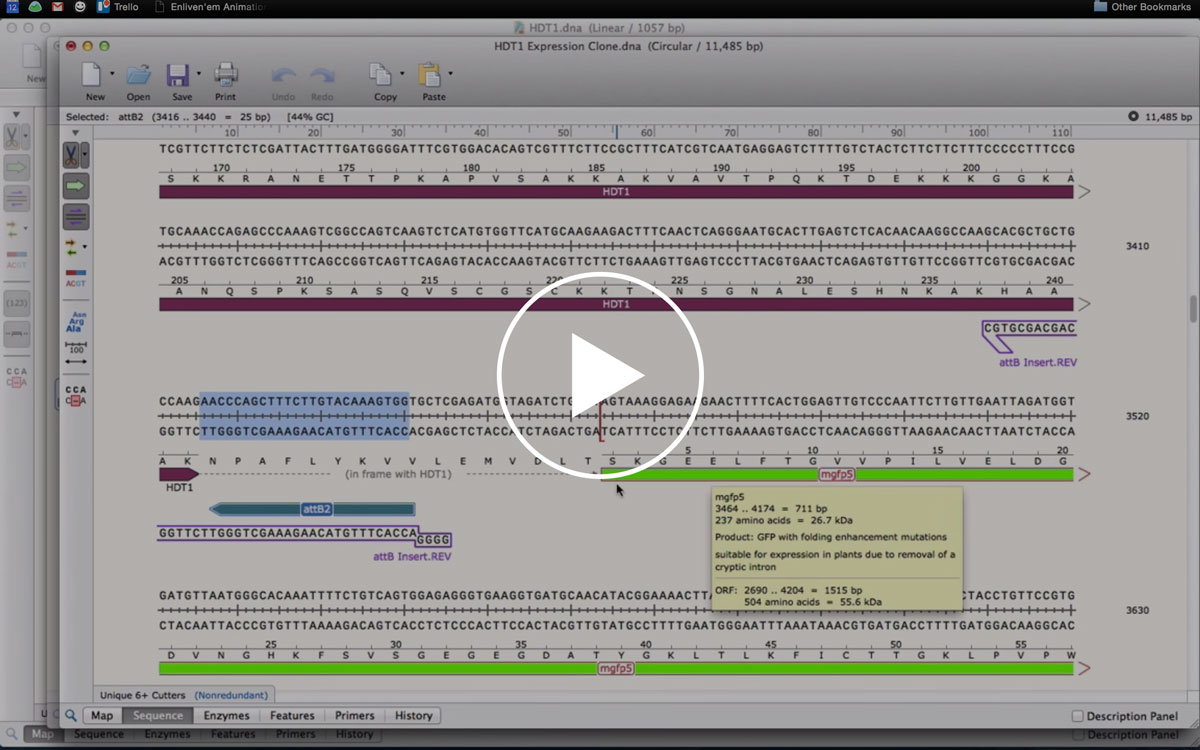 SnapGene Software Tutorial Videos for Cloning Methods and More